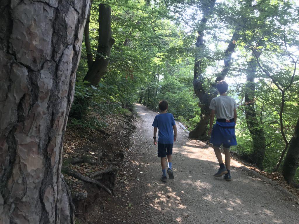 Donaudurchbruch Wandern - durch solche Waldwege führt die Wanderung